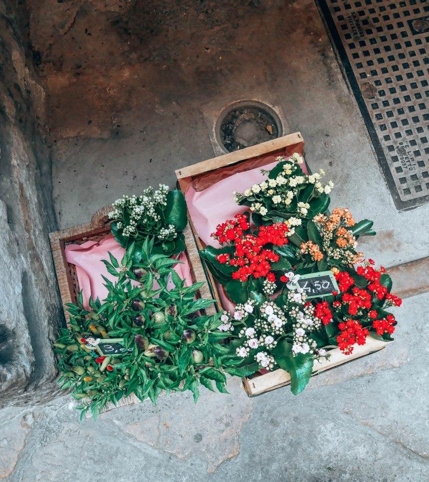 volterra fleurs